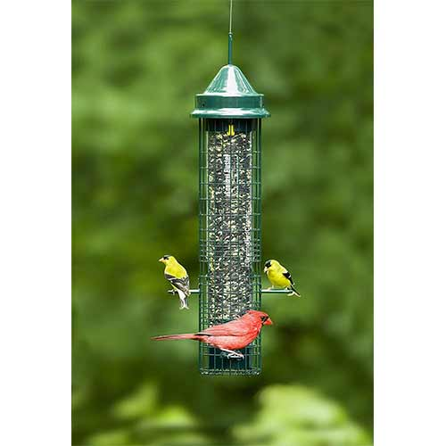 Best Outside Wild Bird Feeders 8. Squirrel Buster (classic)