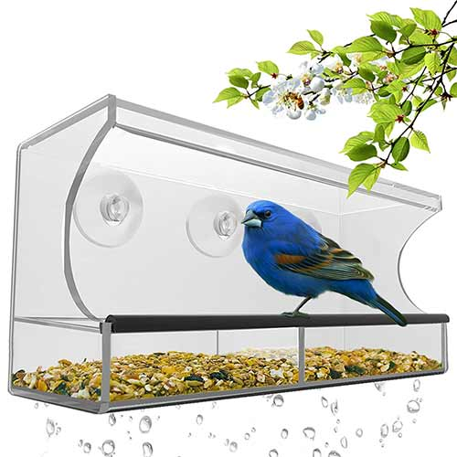 Best Outside Wild Bird Feeders 6. Best window bird